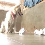 自由奔放な子うさぎ達。興味津々な犬