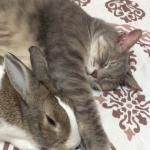 仲良しな、うさとネコ