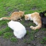 真昼間からうさぎさん発情中!!しかし、猫さん、ガン無視!!!