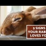 うさちゃんがあなたのことを好きである5つのサイン