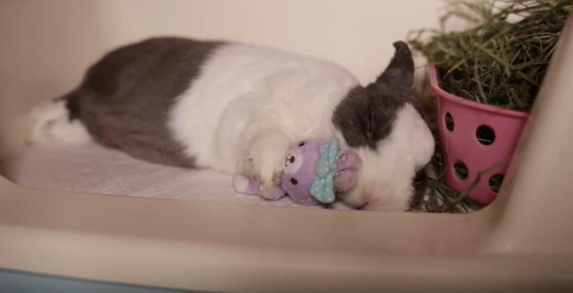 うさ人形をしっかりと抱いて眠るうさぎちゃんが可愛すぎる!!!!