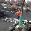 どひゃぁぁぁぁ!!三原山噴火を想定した、うさぎの避難訓練wwww