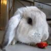 うさぎちゃんがイチゴを食べると…